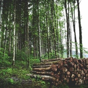 New Timber Marketing Method: Study of Conditions and Impacts
